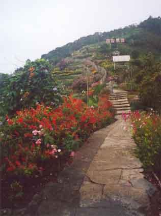 Path in flower farm